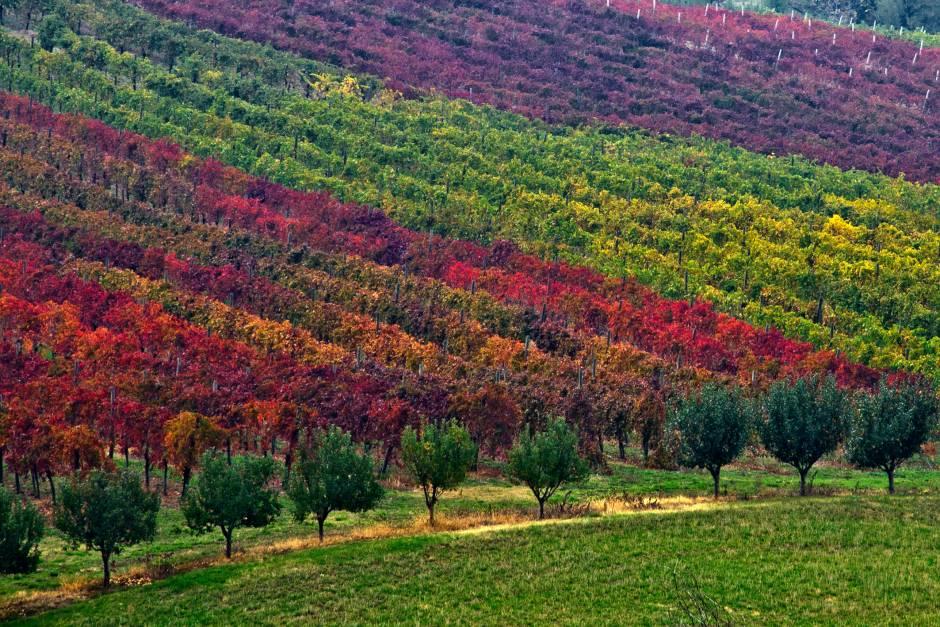 """Terre di Lambrusco: il concorso che celebra il """"Rosso Frizzante"""""""
