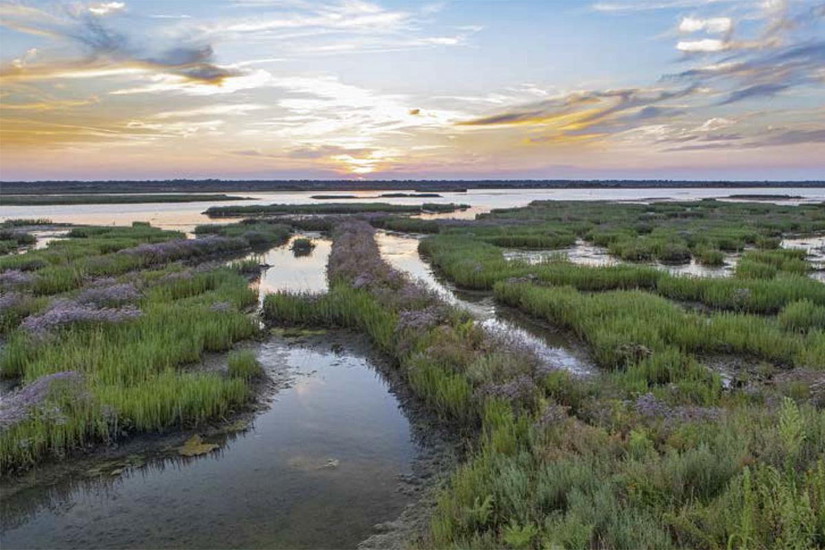 Lungo il fiume Lamone | Piallassa della Baiona (Ravenna)