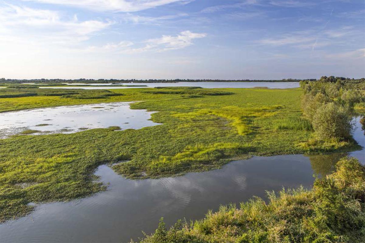 Lungo il fiume Lamone | Valle Mandriole o della Canna (Ravenna)