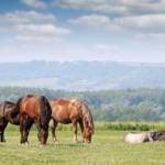 Appennino a Cavallo in Emilia Romagna | Foto © icavalieridelcusna.it