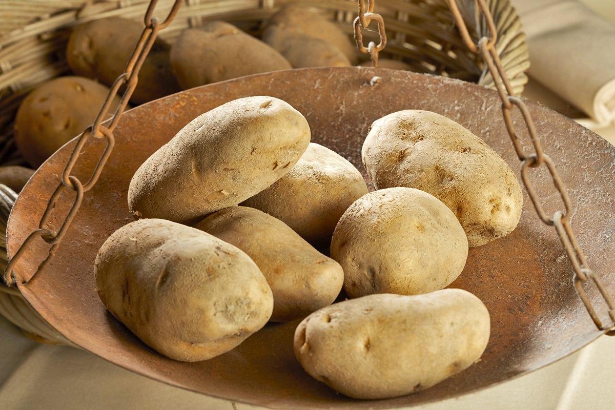 Potato Museum | Budrio (BO)