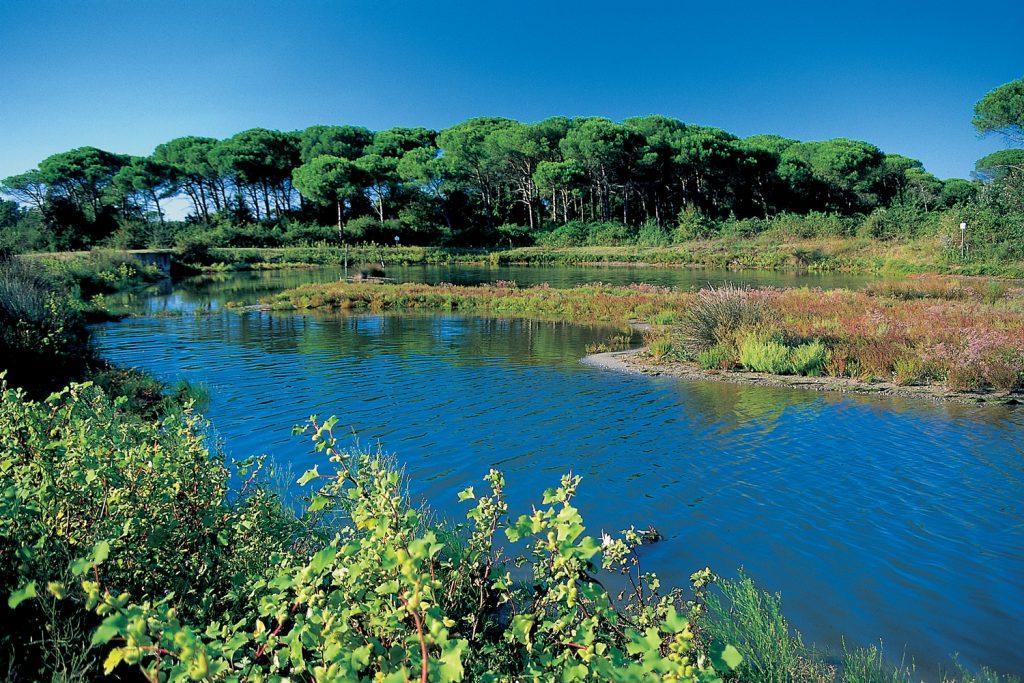 San Vitale Pinewood   Pic by RavennaTourism