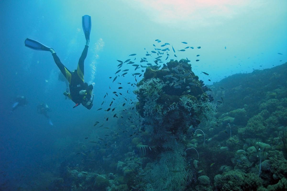 The reef of Piattaforma Paguro