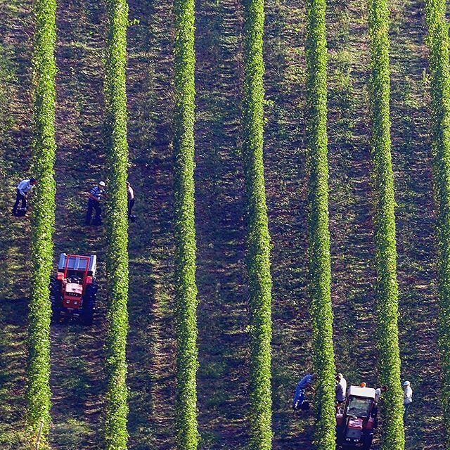 3 Wines to Taste in Emilia-Romagna