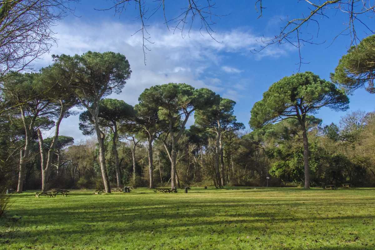 La Pineta di San Vitale (Ravenna)