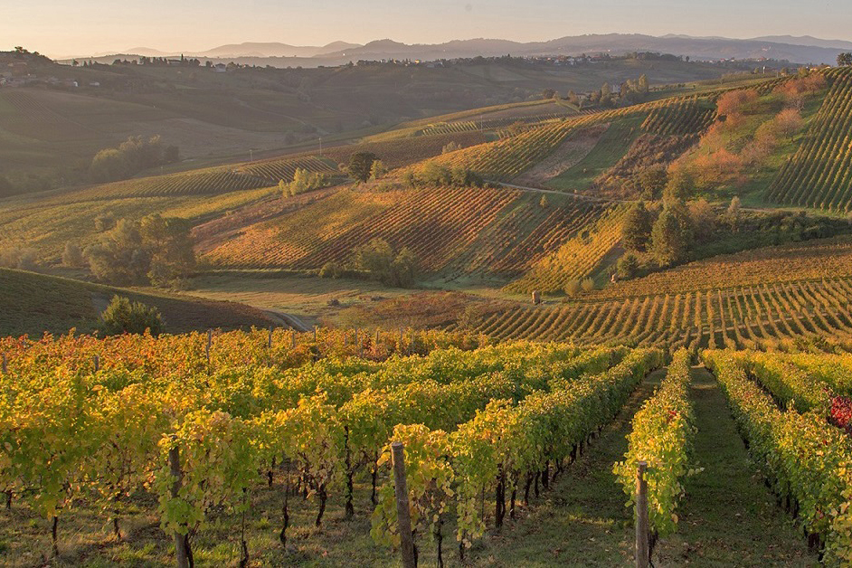 The vineyards of Val Tidone (Piacenza)