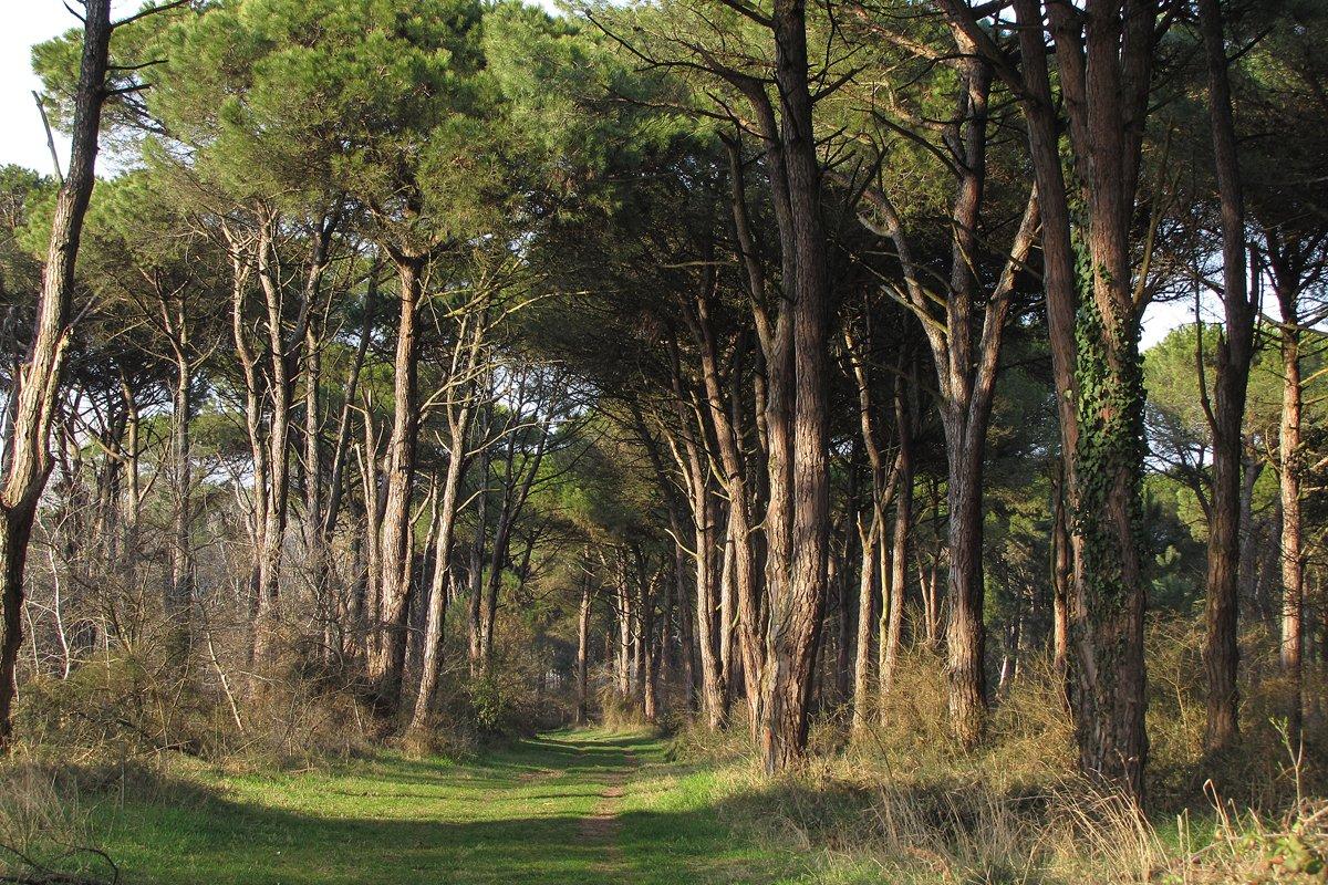 Pineta di Classe (Ravenna)