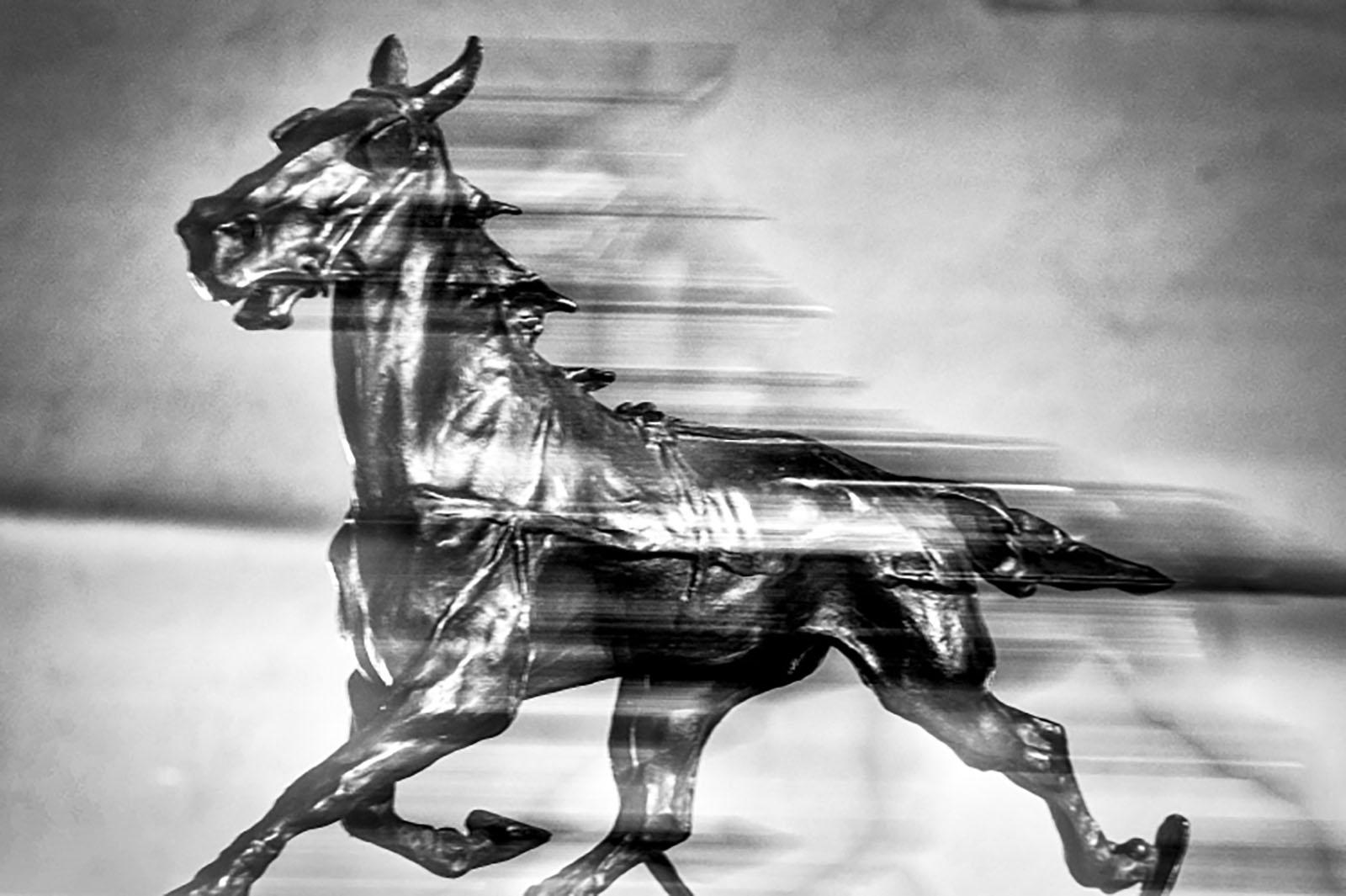 """Racconti """"bestiali"""", Giuseppe Chiastra, Circolo Fotografico Renato Brozzi-APS"""