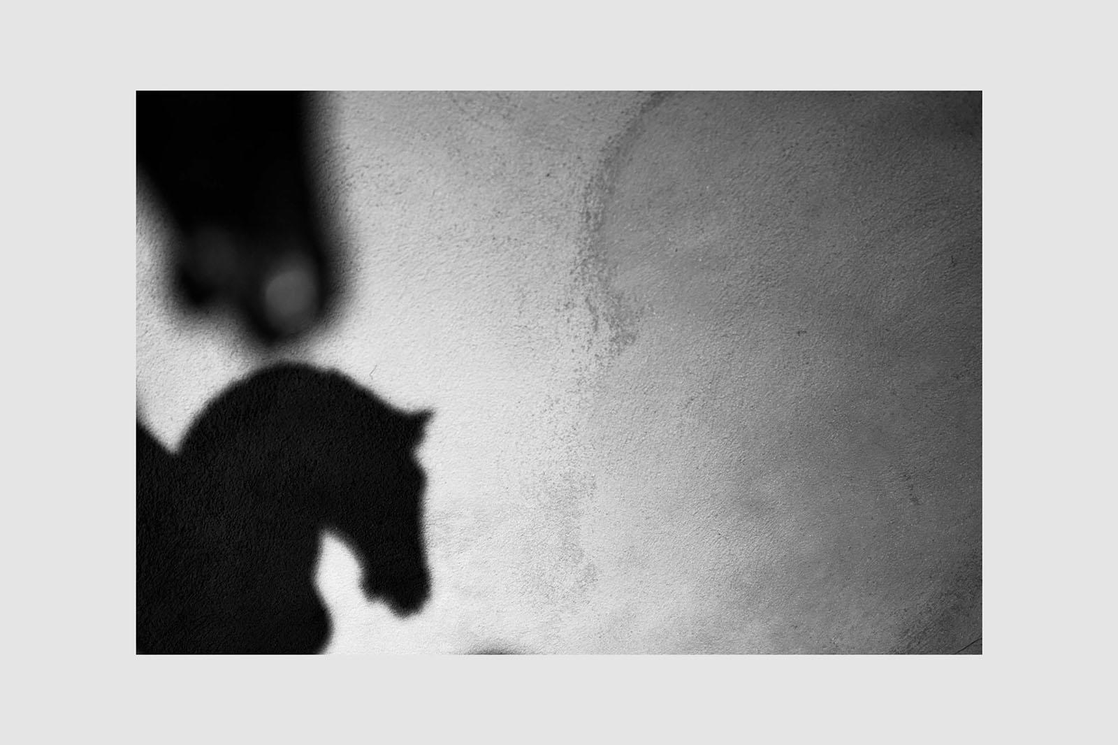 """Racconti """"bestiali"""", Circolo Fotografico Renato Brozzi-APS"""
